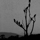 the raven tree at dusk by Alenka Co