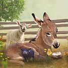 A Little Rest by Trudi's Images