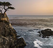 Lone Cypress by Francesco Carucci