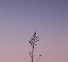 Simplicity by Hannah Taylor