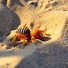 Friendly Potato Bug by Morgana Horn