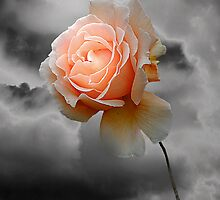 Rose Free by Christine Lake