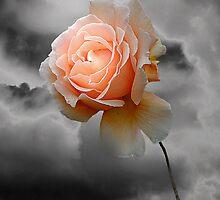 Rose Free by Christine Lake