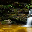 Terrance Falls, Hazelbrook, Blue Mountains, New South Wales, Australia by Michael Boniwell