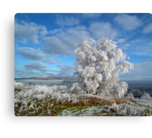 Frosted tree. Canvas Print