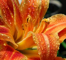 Day Lily After A Rain by WildestArt