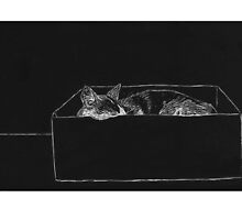 Cat in a Box by Alrkeaton