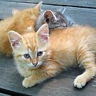 Three Little Kittens by teresa731