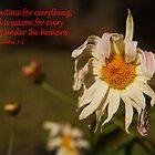 Ecclesiastes 3:1 (day 6) by tonysphotospot