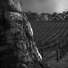 Scary Tree- Hills Vineyard by Ben Loveday