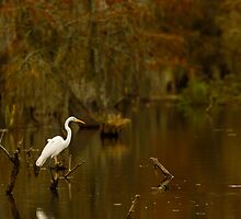Great Egret on Lake Martin, Breaux Bridge, Louisiana by Paul Wolf