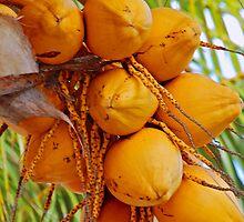 Golden Coconuts by Rashad Penn