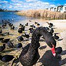 Black Swan by WendyJC