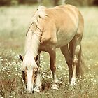 Haflinger Horse Grazing by jamieleigh