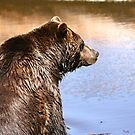 Grizzly Bear... by RichImage