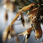 Seed Pods by Samsticks