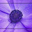Anemone  by AnnDixon