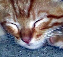 Ginger Sleeps by Chris Gudger