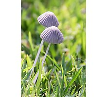 Magic Mushrooms? Photographic Print