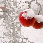 Winter Apples by John Poon