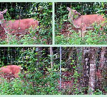 Doe and Fawn in Dunnellon by AuntDot