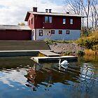 Krnotforeningen Oresund swans in Malmo by Ren Provo