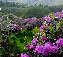 Purple Wildlife by Karin  Funke