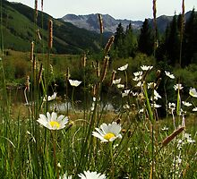 Wildflowers in Ashcroft by Eva Kato