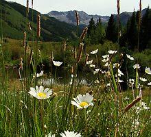 Wildflowers in Ashcroft by Eva Kato