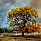 Autumn Tree in Anza by Rhonda Strickland