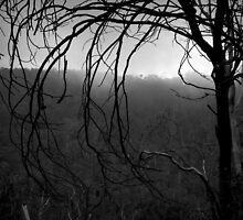 Scary Tree- Gunbower Track by Ben Loveday