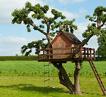 Beautiful creative tree house by Ron Zmiri