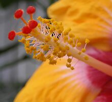 Hibiscus guts. by swallybee