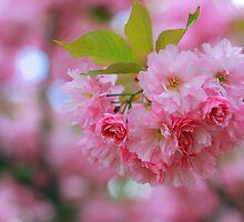 Pretty in Pink by kutekatgurl