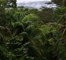 Panama Rainforest by Sauropod8
