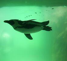Penguin Swim by K.Audrey Leto