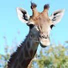 giraffe by Michelle *