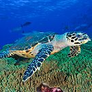 Hawksbill Turtle by MattTworkowski