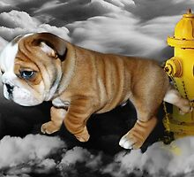 ☀ ツ UP IN THE CLOUDS WHAT DO I SEE A FIRE HYDRANT JUST WAITING FOR ME (SENDING EMAIL)CARD/PICTURE☀ ツ by ╰⊰✿ℒᵒᶹᵉ Bonita✿⊱╮ Lalonde✿⊱╮