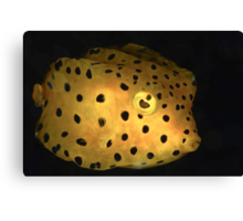 Yellow Boxfish Canvas Print