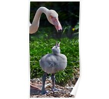 Flamingo and Puffball Poster