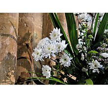 Flowers At St Mary,s Church Bridport, Dorset UK  Photographic Print