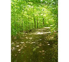 Green path Photographic Print