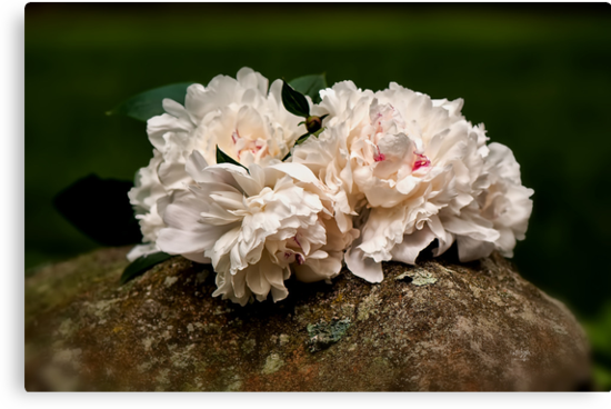 Peony Bouquet on Mossy Rock by Lois  Bryan