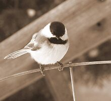 Chickadee on a wire by sevenfeathers