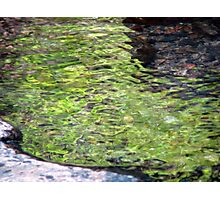 Flow of Green Photographic Print