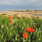 Alnmouth, Northumberland by James1980