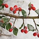 Winter Berries by James1980