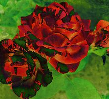 Colourful Textured Roses by Vitta