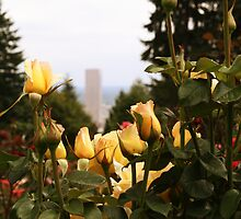 Portland, OR Rose Garden by Kodi  Sershon